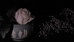 Poetry (Rand Luv'n Life) Tags: odc our daily challenge fragile fatigue rose wedgwood jasper ware bowl babies breath greek roman statues poetry gravity grace simone weil text monochrome black background indoor composition