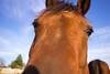 Here's looking at you, Kid! (Jules Marco) Tags: pferd horse kopf head augen eyes tier animal animalplanet depthoffield dof tiefenschärfe schärfentiefe canon eos600d natur nature outdoor closeup nachtaufnahme weitwinkel wideanglelens sigma1020mmf35exdchsm