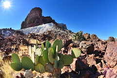 Tuff Formations Cacti