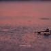 Blatt auf zugefrorenem See