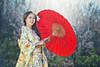 Kimono: Traditional Japanese (Bugphai ;-)) Tags: japanese kimono woman women young girl beautiful traditional nature culture asian dress tradition japan background white blossom beauty cherry red people female person portrait cute colorful lady garden park geisha asia clothes costume umbrella wearing spring view color rear friend face smile
