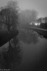 20161231Brouillard-15 (loflol) Tags: coteaux brouillard brume ancien grain