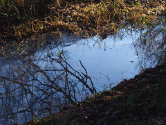 dull as ditchwater (mark.griffin52) Tags: olympusem5 england bedfordshire leightonbuzzard oldlinslade winter reflections water drainage ditch