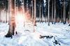 Warm sun (Gruenewiese86) Tags: harz schnee wald winter sonne canon forest explore exploreharz nature