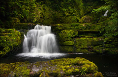 Lower McLean Falls (katepedley) Tags: waterfall river water falls mclean lower catlins southisland south island nz newzealand new zealand wild moss mossy rain tripod polariser canon 5d 1740mm creek stream otago