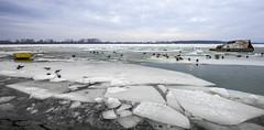 Ice over the Danube (Neca 79) Tags: ice snow river riverside danube dunav zemun semlin belgrade serbia boat birds dissaster winter canon eos1dsmarkiii ef1635f4lisusm