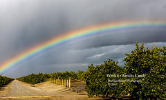 Skittles - Taste the Rainbow (RedHatGal: Barbara Butler/FireCreek Photography) Tags: candy rainbow overorangegrove sky storm clouds outdoor landscape road orchard agriculture kerncounty barbarabutlerphotography firecreekphotography redhatgal dogwood2017 dogwood52week6