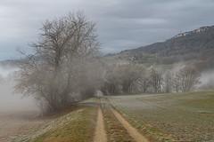 A9900550_s (AndiP66) Tags: winterstimmung nebel fog mist sun sonne sunrays sonnenstrahlen wolfisberg kantonbern cantonofberne hills hügel winter sony sonyalpha 99markii 99ii 99m2 a99ii alpha ilca99m2 slta99ii sigma24105mmf4dghsmart sigma 24105mm f4 amount andreaspeters