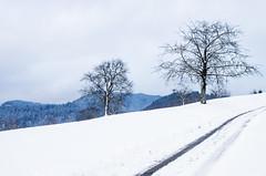 IMGP5715 (laurec.) Tags: luge neige oppenau