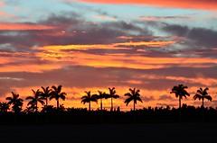 A subtropical sunset, southern Florida (NgoPhotographyPlz) Tags: subtropical palms sunset flat warm humid region southern florida peninsula
