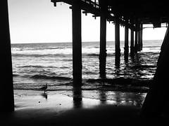 Santa Monica pier before the tide #pier #santamonica #ocean #blackandwhite (The Paper Thieves) Tags: pier santamonica ocean blackandwhite