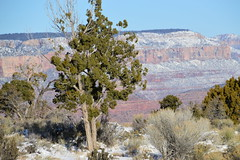 Grand Canyon 125 (Krasivaya Liza) Tags: grandcanyon grand canyon national park canyons nature natural wonder az arizona holiday christmas 2016 snowy winter cliffs cliffside edgeofcliff