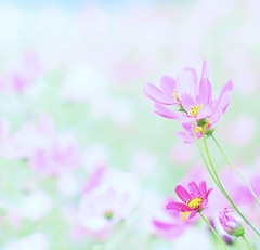 (sweetheart*) Tags: pink flower nature