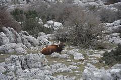 2015-02-07 10.57.42 (Reydelpro) Tags: españa trekking andalucia malaga senderismo torcal antequera 2015 espaa reydelpro