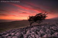 Twistleton Sunset (.Brian Kerr Photography.) Tags: sunset tree yorkshire limestone ingleton ingleborough limestonepavement sonyalpha twistletonscar briankerrphotography briankerrphoto sonyuk a7rii
