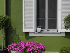 house in green (Hayashina) Tags: pink flowers italy house green window monticello hww