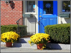 Close-Up Of Flower Plants At P. Church Jewelers In Chelmsford, MA. - Photo Taken by STEVEN CHATEAUNEUF On October 10, 2015 With Some Editing Done (snc145) Tags: blue red green yellow store windows door sign steps railing redbrick pavement shadows flowerpots flowers bushes bright bold vivid colors colorful pretty beautiful editedimage photo autumn seasons paintshoppro6 business chelmsford massachusetts usa october102015 stevenchateauneuf pchurchjewelers flickrunitedaward soe autofocus thisphotorocks