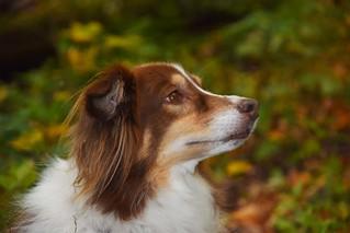 Trail Buddy