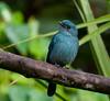 _DSC0830 (Dato' Professor Dr. Jamaludin Mohaiadin) Tags: birds nikon dr hills malaysia fraser prof melayu dato 400mm burung jamaludin mohaiadin d800e