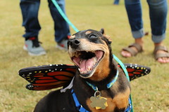 """Dogs, dog park, richmond • <a style=""""font-size:0.8em;"""" href=""""http://www.flickr.com/photos/31682982@N03/22336020800/"""" target=""""_blank"""">View on Flickr</a>"""