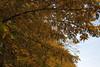 Floriade_251015_44 (Bellcaunion) Tags: park autumn fall nature zoetermeer rokkeveen florapark