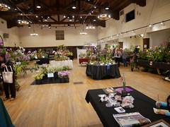 P1100041 (cieneguitan) Tags: flora lan bunga orkid okid angrek anggerek