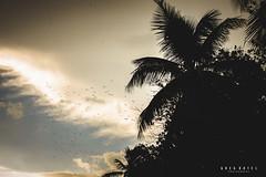 05 - Embarazo de Josymil y Familia_Greg Dotel-2.jpg (GDotel) Tags: familia amor barriga playa bebe padre madre caribe embarazo hija hijos maternidad reciennacido juandolio fotografodominicano gregdotel