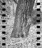 Kodak-V2-500T_Tmax-Dev_FujiFilm-ga645zi_20151115_0007-2 (Zaoliang Luo) Tags: kodak 119 xprocessing tmaxdeveloper vision2 fujifilmga645 500t 1045min