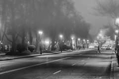 Calles invadidas de niebla (mls2012) Tags: people blackandwhite dog blancoynegro canon 50mm calle arboles gente foggy streetphotography perro niebla 18f 60d