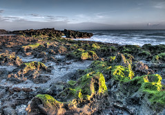 Limestone rocks (tshabazzphotography) Tags: longexposure shells nature clouds sunrise moss sand arch footprints beachlife atlantic dslr canondslr atlanticocean photography101 crashingwaves naturelovers longshutterspeed beachlovers earlybird pepples flickrfan canonpics limestonerocks limestonecliffs jupiterflorida beachphotography landscapephotos blowingrockpreserve sunriselovers smoothwaves coralcovebeach photographyislife igers landscapephotographers canonphotogrpahy hopesound