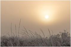 morningsun (HP019860) (Hetwie) Tags: natuur frost ijs heather nachtvorst ice zonsopkomst kou rijp nature sunrise ochtend strabrechtseheide strabrecht frozen vorst heide lierop noordbrabant nederland
