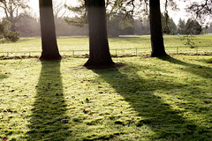 Sunlight & Shadows (Keith (M)) Tags: trees m240 boxingday leica winter 2016 westonbirt arboretum summiluxasph 50mm