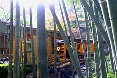 Cafe (tez-guitar) Tags: tree bamboo trees forest wood autumn autum 紅葉 autumn leaves leicax1 leica cafe house kamakura