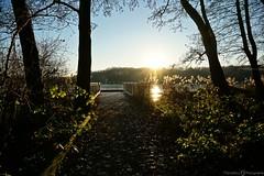 Seenlandschaft -  Krickenbecker Seen (photographie by jacobiclever) Tags: wald baum bäume waldweg weg steeg see seen lake wasser sonne sonnenschein krickenbecker