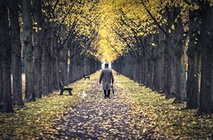 a walk in the park (digital_underground) Tags: dog tree men street umbrella autumn park garden germany hannover niedersachsen sonyalpha a7ii