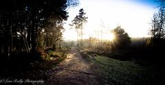 Winter Light-9 (broadswordcallingdannyboy) Tags: light twilight dusk mood sun magichour longlight sunset winterlight sparkle countryside winter frost eos7d 1740mm wideangle lightfantastic shadows lightandshadows surrey nationaltrust devilspunchbowl surreylandscape
