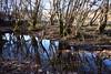 riflessi nel fosso - reflections in the ditch (Vincenzo Elviretti) Tags: fosso ditch stagno riflessi con pozzo della mola fiume river reflection fiumiciattolo aniene valle