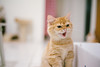 (ChCh Chen) Tags: cat cats kitten kittens kitty lifes sony zm 50mm sonya7