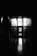 55020017 (Dito Nyc) Tags: leicam2 leica sekonicl308s ilford hp5 4001600 hp53 nyc thedarkroomlab blackwhite blancoynegro voigtlander colorskopar 35mm 35mmf25 rangefinder film filmcamera