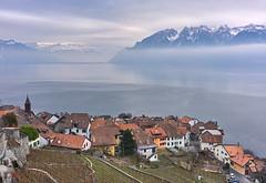 Rivaz (Karl Le Gros) Tags: switzerland cantondevaud lavaux xaviervonerlach rivaz lacléman alpes lebeaupaysdevaud 2017 winter