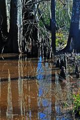SWAMP 4 (KayLov) Tags: nature environment ecology swamp phinizy augusta ga georgia creek water pond lake wildlife