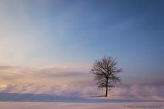 Nuances de pastel (Danny Lamontagne) Tags: tree landscape paysage arbre sunset bleu color magenta couleur pastel quebec troisrivières canada canon nature winter hiver