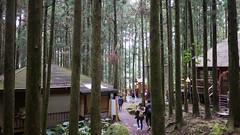 綠光小學 (momodie81) Tags: 新竹 台灣 綠光 馬武督 關西 森林 探索 樹木 植物
