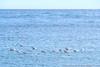 DSCF5709 (Klaas / KJGuch.com) Tags: trip travel traveling costabrava tossademar sea beach vacation sun sunnyday daytrip coast coastal xpro2 fujifilm fujifilmxpro2 nature wave waves water movement movingwater waterart