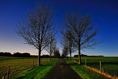 Into the night (images@twiston) Tags: tree trees treelined moon moonlight row drive straight track northyorkshire stars cloudless star orion constellation full blue sky night field fields farm farmland landscape imagestwiston longexposure afterdark nightshot lowlight nighttime avenue yorkshire