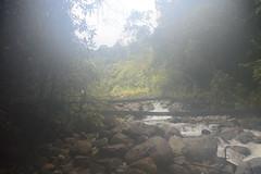 Cloud forest (Christophe Maerten) Tags: plant plante mos mount virgin bosque jungle area cloudforest gunung piante sulawesi mossy mousse carnivore celebes pristine foresty tengah oerwoud poso mulut nevelwoud maagdelijk centaal vleesetende lihasyokasvia numioso