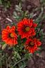 Flores de primavera (joaquingnazzo) Tags: flowers naturaleza flores macro primavera nature spring nikon fotografia nikkorlens nikond3200 fotoarte 200mmlens d3200 fotografosuy igers instanature nikonuruguay igersuy igersmvd audiovisualuruguay natureonfocus