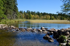 Headwaters of the Mississippi River (AZSunsets) Tags: minnesota river mississippi northwoods itasca pristine oldmanriver headwaters