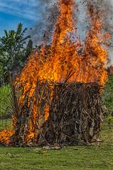 Fire Set During Sing-sing Performance, Komoa Village, Papua New Guinea (bfryxell) Tags: fire papuanewguinea singsing oceania melanesia tufifjord komoavillage