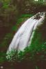 IMG_6466 (athingcalledlife) Tags: blackandwhite india green art nature rain photography colours lush coorg virajpet vsco